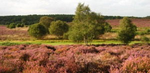 Photo of Dunwich Heath