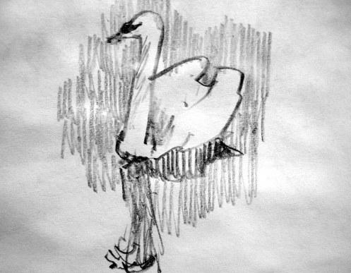 "Swan - pencil 3""x4"""
